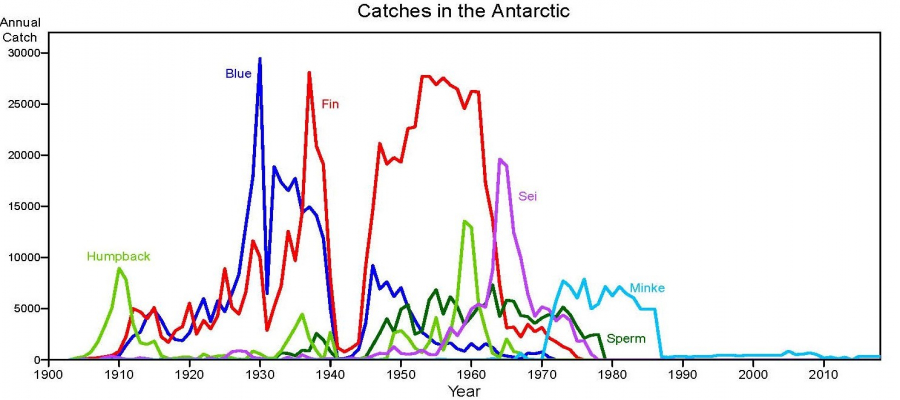 Antarctic catches 1900 2020 2